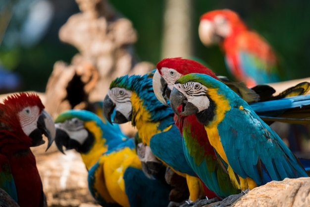 Beautiful macaw parrots clsoe up