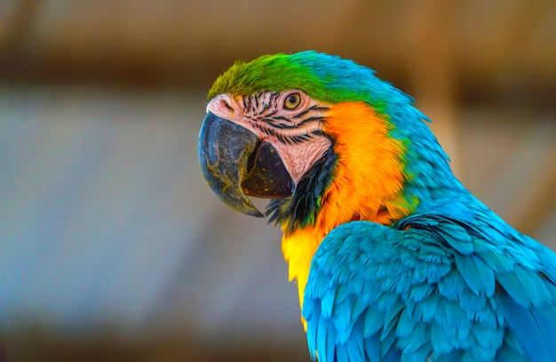 Красивая ара