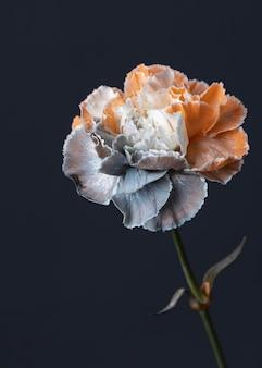 美しいマクロ咲いた花