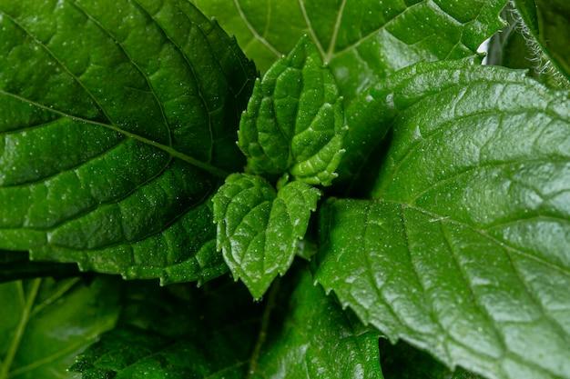 Beautiful macro green plant concept