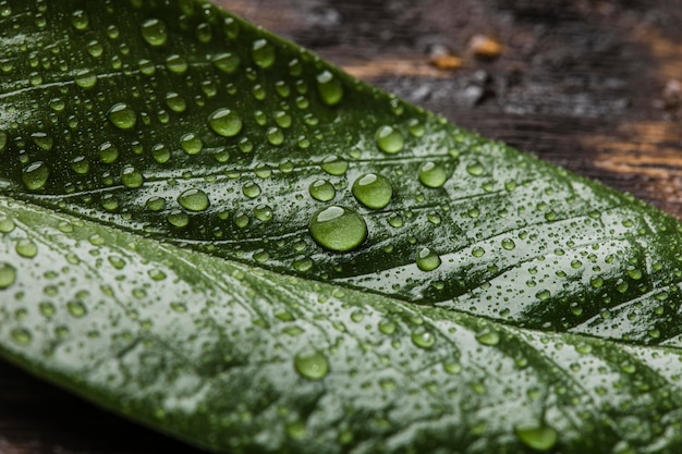 Bella pianta macro con gocce di pioggia