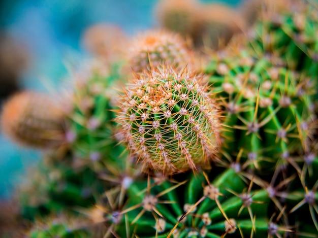 Beautiful macro shots of prickly cactus.