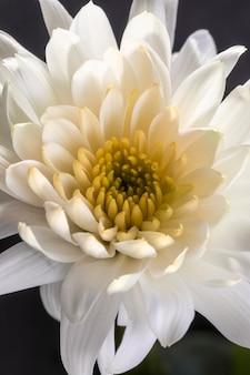 美しいマクロ白い花