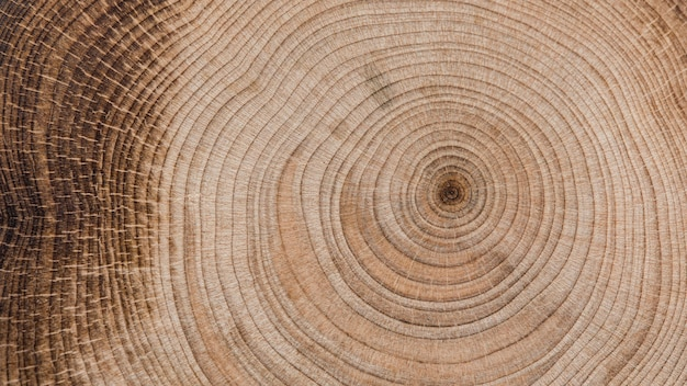 Beautiful macro wood concept