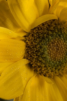 Красивый макро желтый цветок
