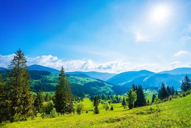 Красивый волшебный вид на еловый лес, растущий на холмах и горах в солнечный летний день