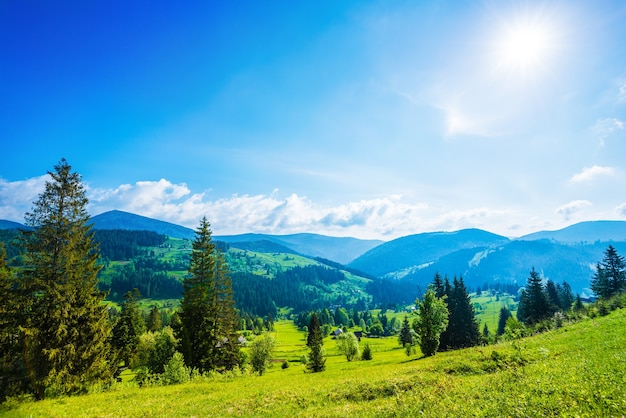 Beautiful magical view of the spruce forest growing on the hills and mountains on a sunny summer day