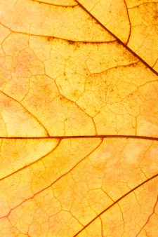 美しいカエデの葉のクローズアップ。高品質の写真