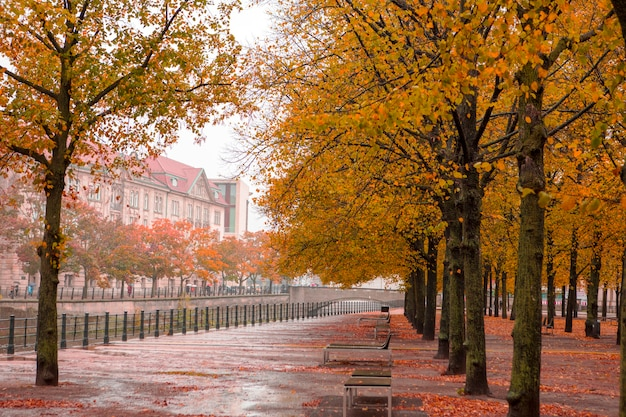 Beautiful maple trees on rainy days