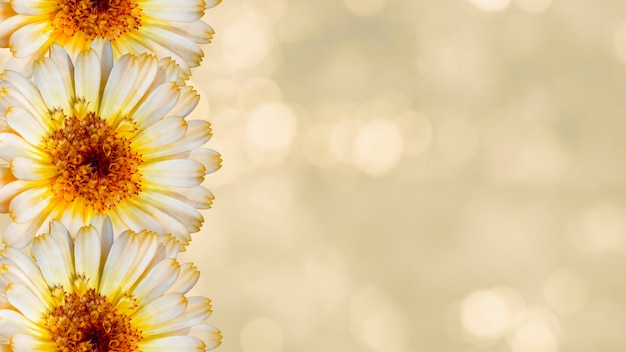 Beautiful marigold flowers on yellow blurred background. festive flowers concept. floral card with flowers, copy space.