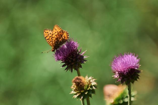 野生の花と美しい牧草地