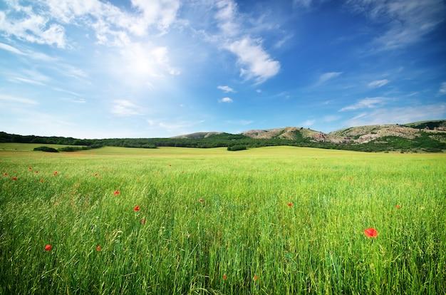 아름 다운 초원 풍경입니다. 자연의 구성.