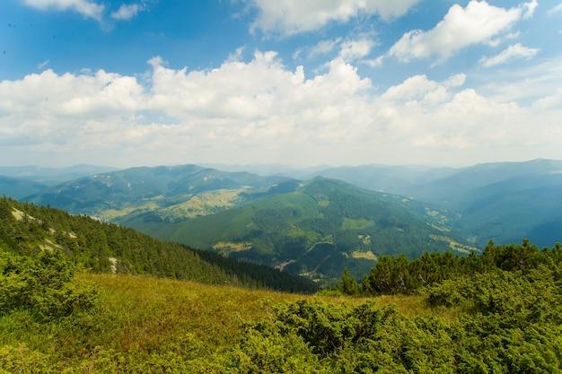 山の美しい牧草地