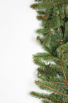 Beautiful merry christmas banner with evergreen spruce branches on white
