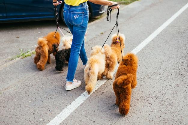 아름다운 중년 금발의 여자는 그녀의 사랑스러운 미니어처 푸들과 함께 산책을 즐깁니다