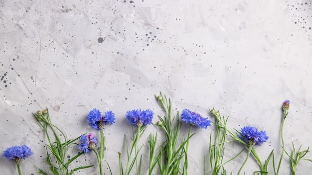 Beautiful minimalistic gray background with blue flowers