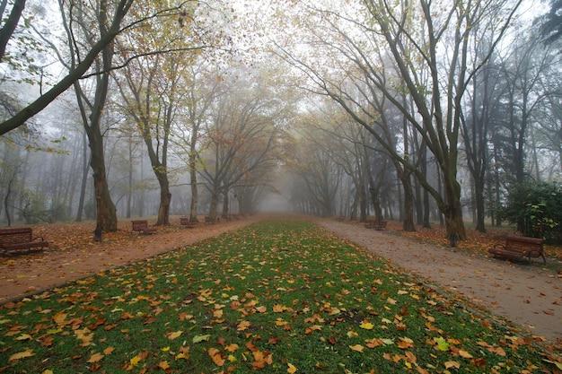 秋のstryisky公園の美しい霧の風景
