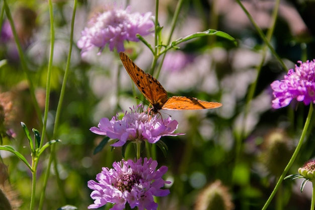 Beautiful monarch butterfly fluttering over lilac flowers and thistles
