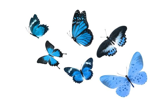 Бабочка красивая монарх, изолированные на белом фоне