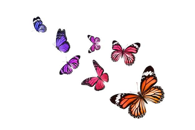 아름 다운 바둑 나비 흰색 절연