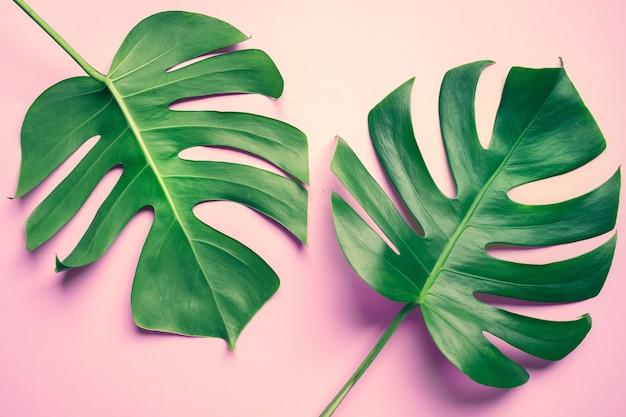 아름다운 몬스 테라 잎 (잎)에 화려한 장식 구성 디자인