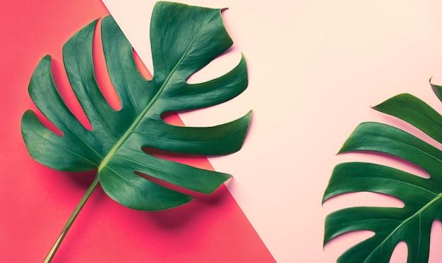 Красивые листья монстеры (лист) на красочном для украшения дизайна композиции