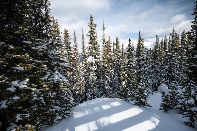 カナダ、アルバータ州、バンフ国立公園の美しいモレーン湖