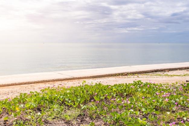 해변에서 아름 다운 나팔꽃 꽃