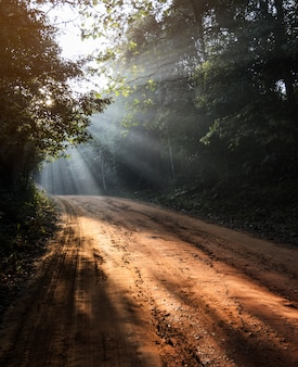 Beautiful morning landscape of dirt track forest with sun rays