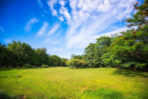 Красивый утренний свет и голубое небо в общественном парке с полем зеленой травы.