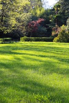 Красивый утренний свет в общественном парке с летним фоном поля зеленой травы