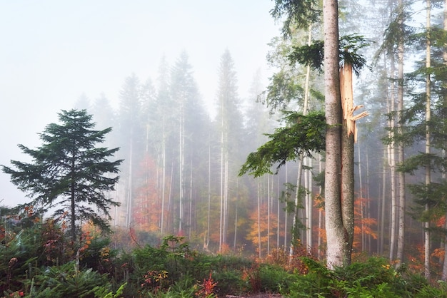 Beautiful morning in misty autumn forest with majestic colored trees.