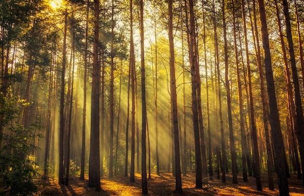Beautiful morning scene, sun rays break through the branches of trees.