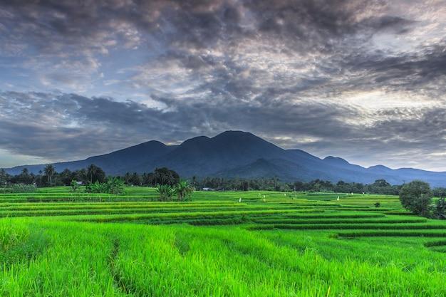 Прекрасное утро с зеленым рисом и голубыми горами в индонезии