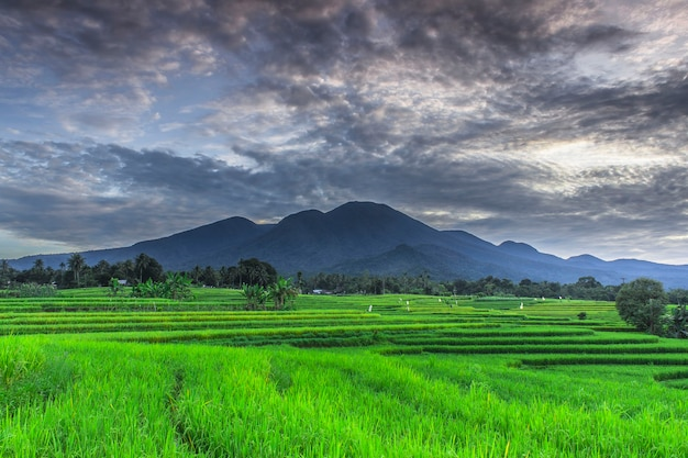 Beautiful morning with green rice and blue mountains in indonesia