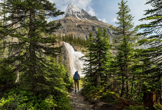 Красивая гора робсон в летний сезон, канада