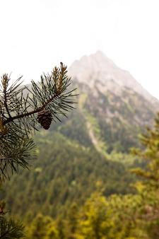 Bellissimo paesaggio di foresta di montagna