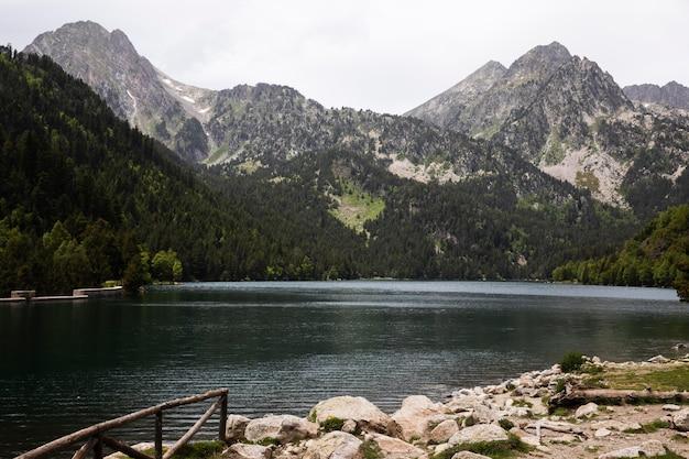 美しい山の森の風景
