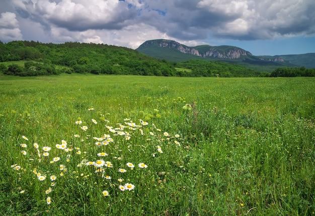 Красивый горный пейзаж с ромашками и пасмурным небом. поле в крыму.