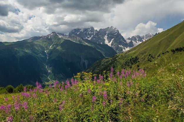 꽃 초원과 아름 다운 산 풍경