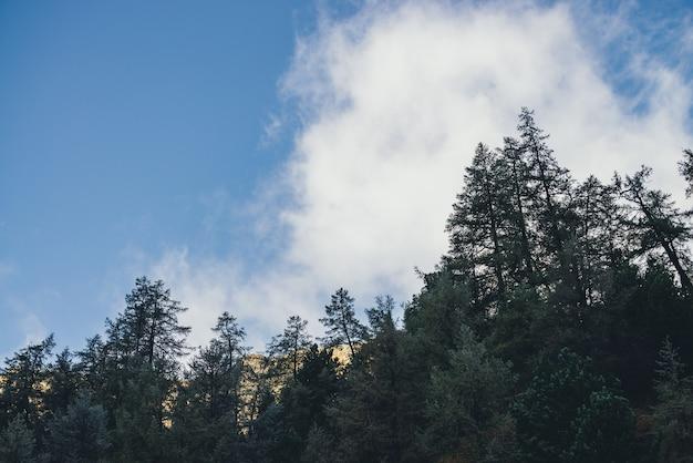 青い空の雲の下で太陽に照らされた金色の岩を望む霜の森のある美しい山の風景。金色の日光の岩を背景に、霜降りの針葉樹の山の風景。