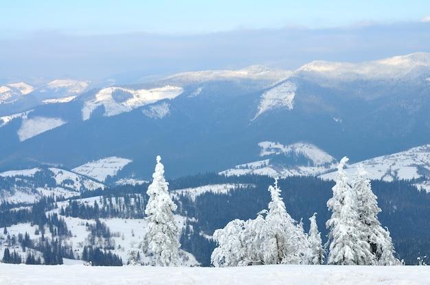 背の高い雪に覆われた木々と美しい山の風景。山の頂上からの眺め、青い空の雲