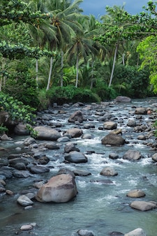 Beautiful mountain river with stones and palm trees on the waterside