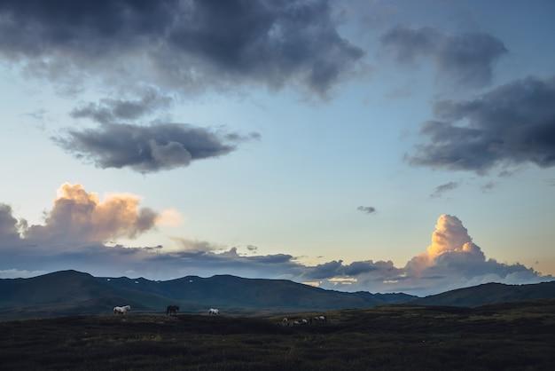 日の出の空に爆発の形で馬と大きな雲のある美しい山の風景。夕焼けの空と丘の上の馬の明るい色で風光明媚な山の風景。空の黄金の夜明けの光。