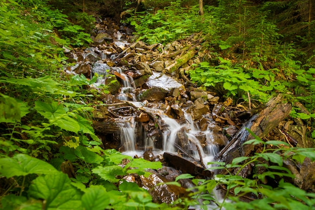 Beautiful mountain stream on  mountains
