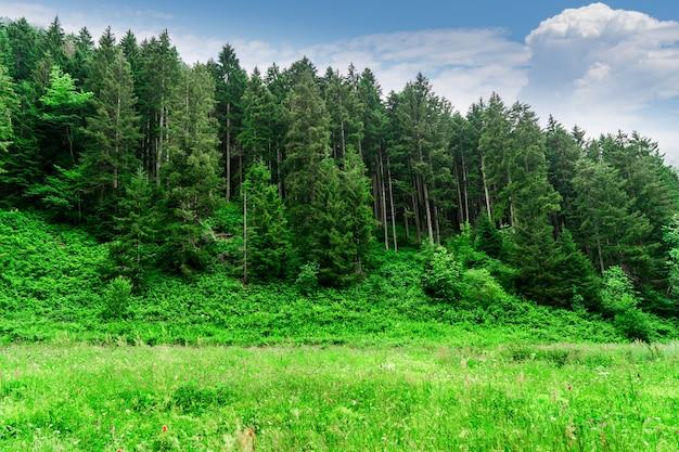 Красивый вид на горы в хайленд и сосновый лес с деревьями