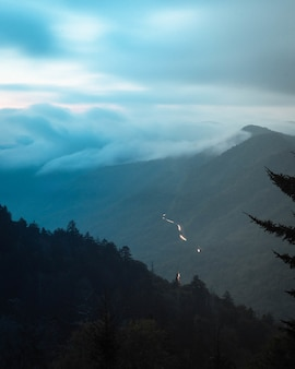 Beautiful mountainous landscape with fir trees and a foggy background