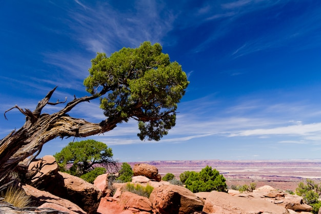 Beautiful mountains and desert landscape with tree and clouds. national park in usa