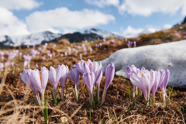 Красивые горы в моравии. наземный вид цветущих цветов.