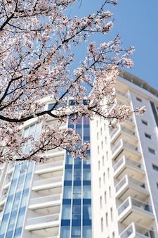 분홍색으로 피는 나무의 가지를 통해 아름다운 멋스러운 건물